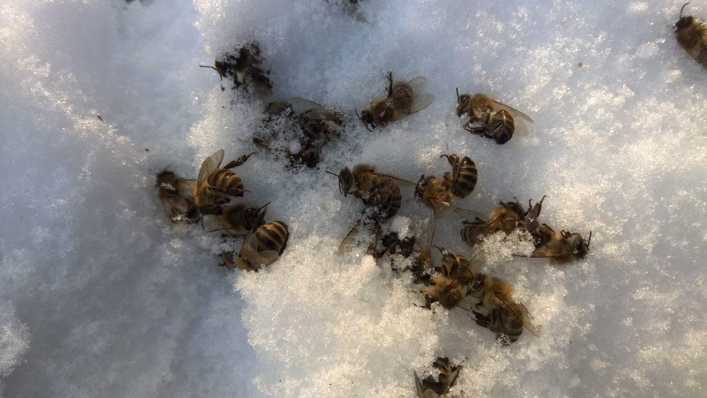Mehiläiset hangella