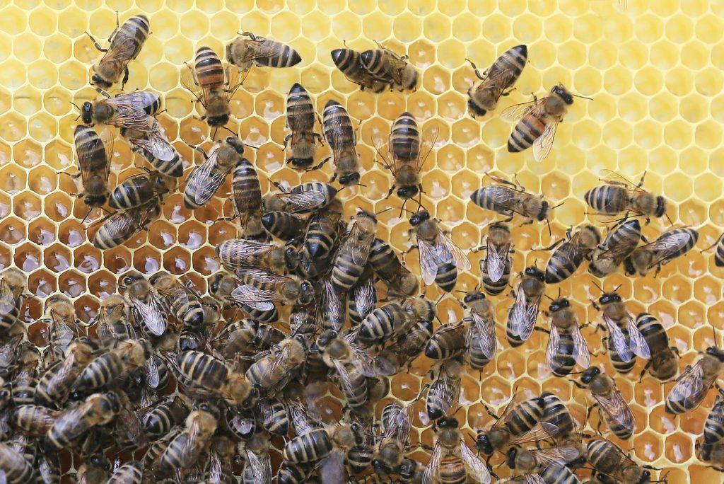 Mitä mehiläiset tekevät talvella