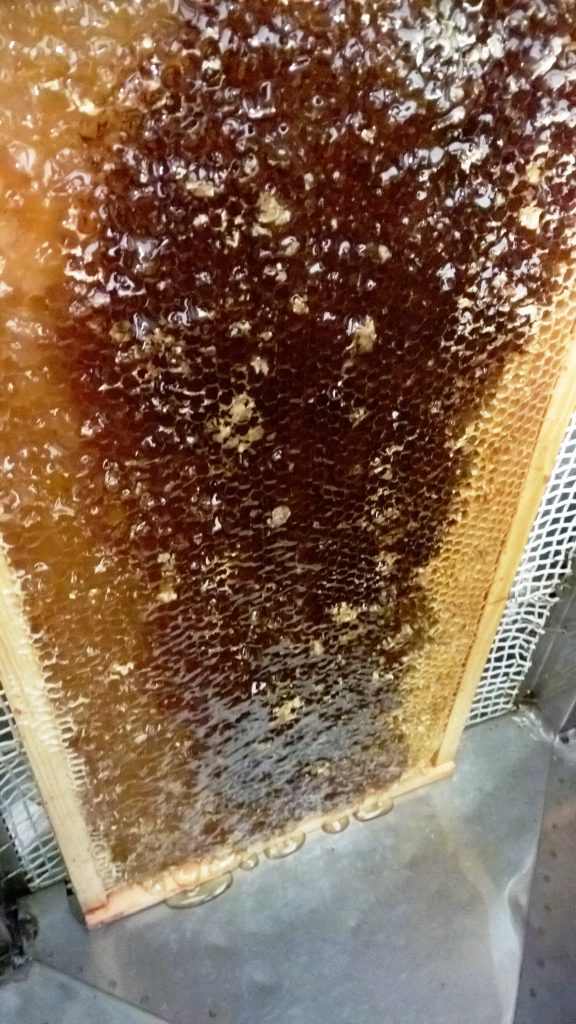 Kuorittu hunajakenno ja hunajan linkous