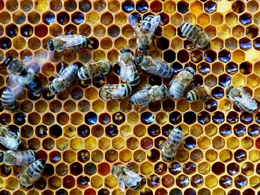 Mehiläiset siitepölyllä